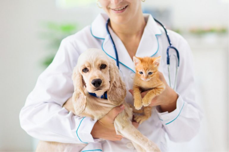 Por qué vacunar a los perros y gatos