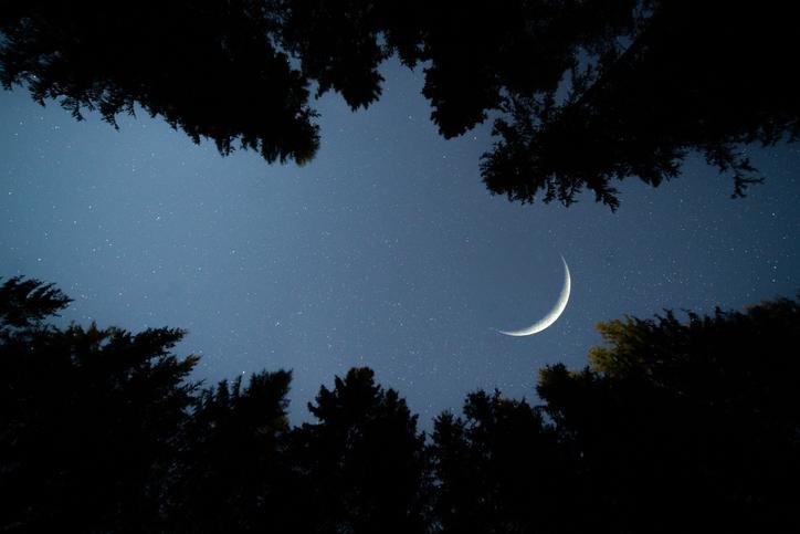espermatozoides a la luna