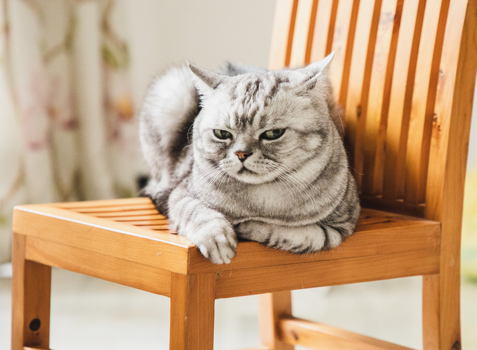gatos socialmente ineptos