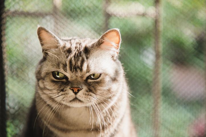 gatos ineptos socialmente
