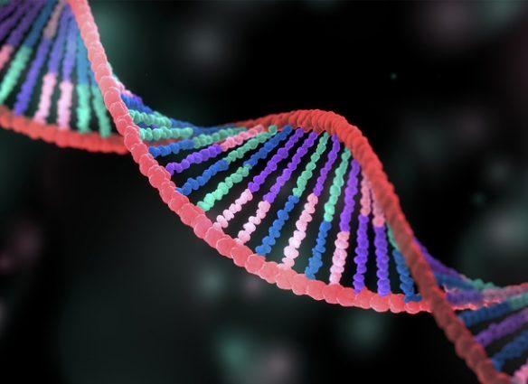 moléculas ADN