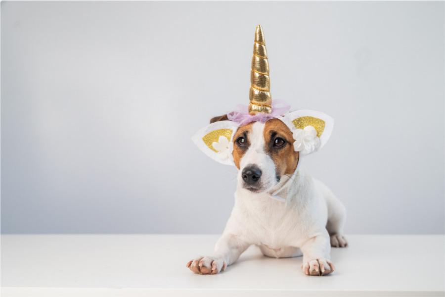 Maltrato animal (humanizar a los perros es malo)