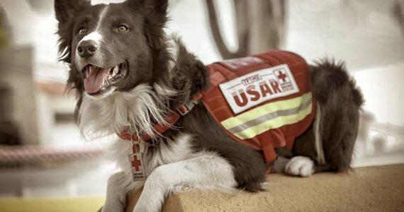 Athos perro rescatista