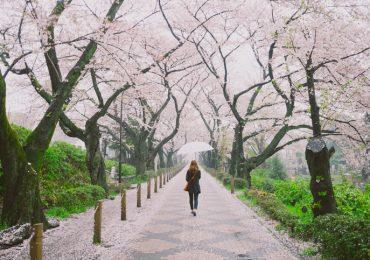 entierros en Japón