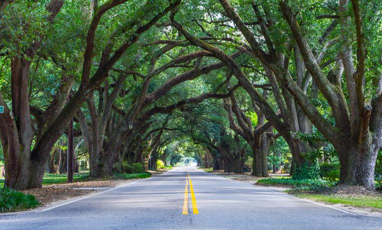 árboles ciudades