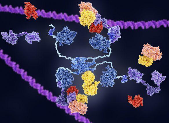 proteína humana