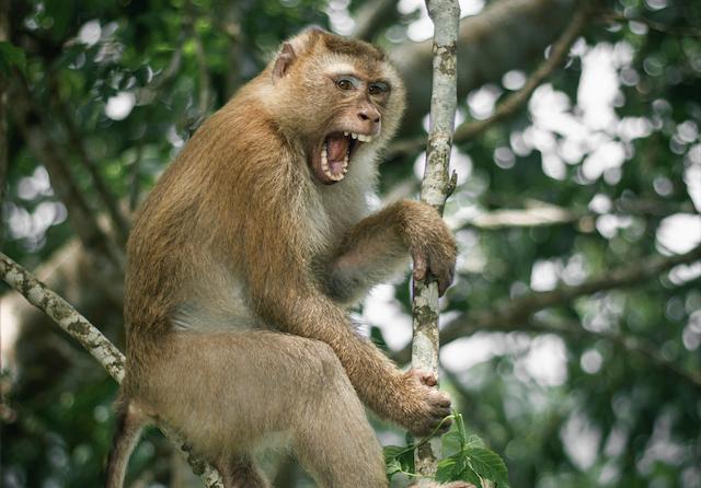 virus del mono B