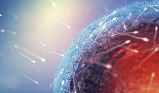 anticuerpo anticonceptivo