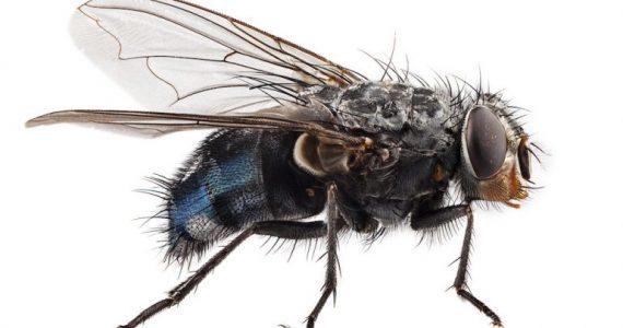 es cierto que las moscas viven 24 horas