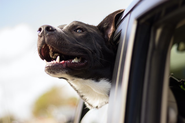adopción perros