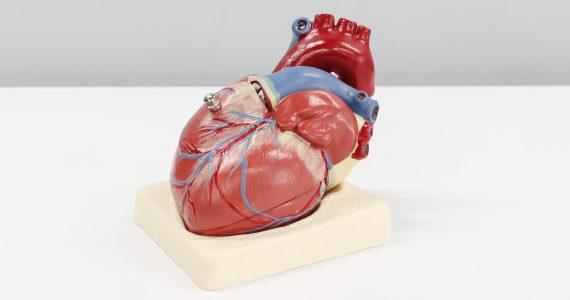 Día Mundial del Corazón: estas son las principales enfermedades cardiovasculares y cómo se pueden prevenir