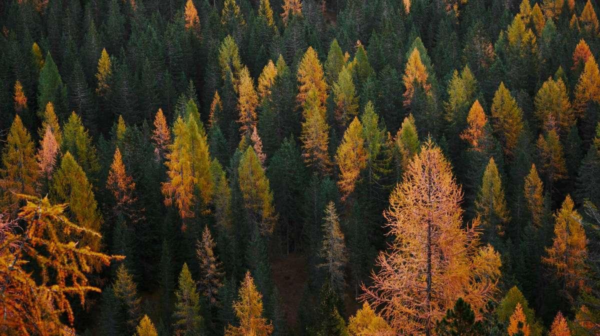 Equinoccio de otoño y el final del verano