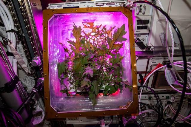 jardinería espacial