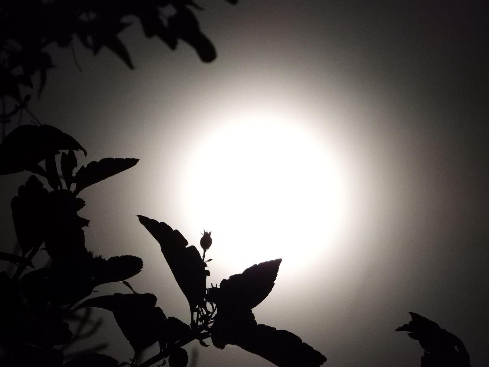 luna estival