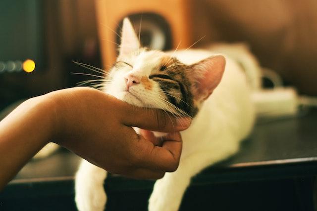 personalidades gatos